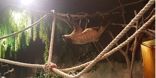 [현장] 줄서서 보는 도심 실내동물원 '주렁주렁'이 인기 얻는 까닭