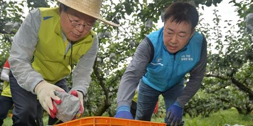 김광수, NH농협금융 봉사단과 태풍 피해농가 찾아 복구에 힘 보태