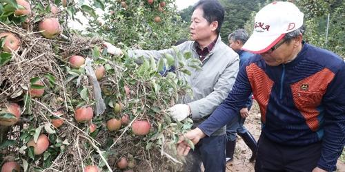 """김병원, 태풍 피해농가 찾아 """"농협 모든 역량 동원해 피해복구"""""""